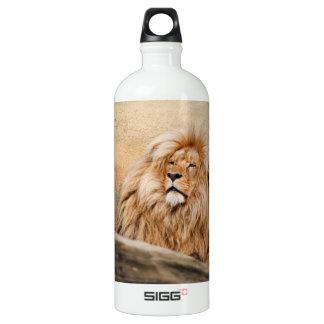 Foto masculina del león