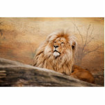 Foto masculina del león esculturas fotográficas