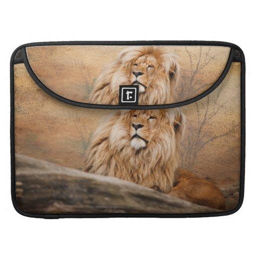 Foto masculina del león fundas para macbooks