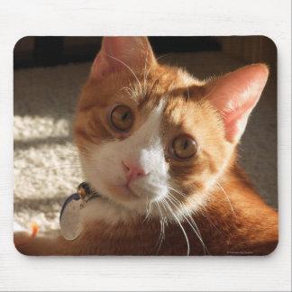 Foto Mousepad del gato del mac Tapetes De Raton