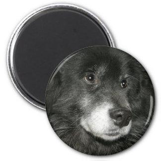 Foto negra de la mezcla del perro chino de perro c imán redondo 5 cm