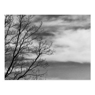 Foto negra y blanca de la naturaleza del paisaje tarjetas postales