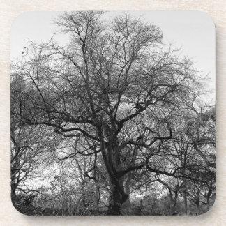 Foto negra y blanca hermosa del paisaje posavaso