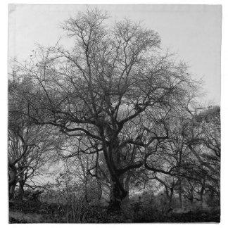 Foto negra y blanca hermosa del paisaje servilleta de papel