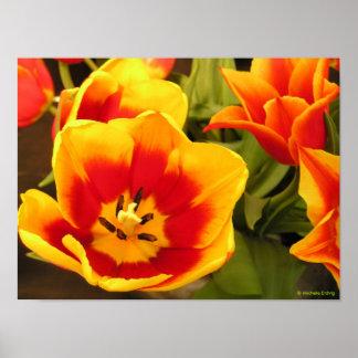 Foto o poster amarilla y anaranjada de la flor