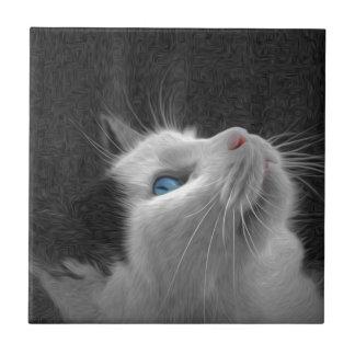 Foto observada azul del gato tejas