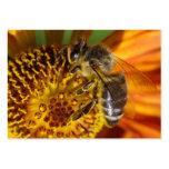 Foto occidental de la macro de la abeja de la miel plantillas de tarjetas personales