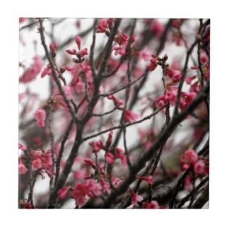 Foto original de la macro de las flores de cerezo azulejo cuadrado pequeño