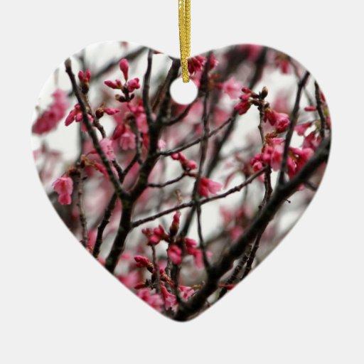 Foto original de la macro de las flores de cerezo ornato