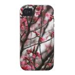 Foto original de la macro de las flores de cerezo vibe iPhone 4 fundas