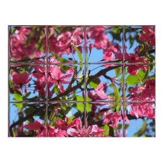 Foto original de la primavera de la postal