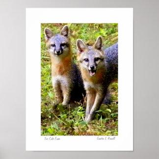 Foto original de los zorros demasiado lindos por S Póster