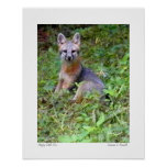 """Foto original del """"pequeño Fox feliz"""" por S.L Russ Poster"""