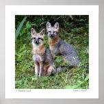 Foto original gris del Fox por S.L Russell 16x16 Impresiones