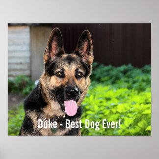 Foto personalizada del perro de pastor alemán, póster