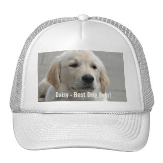 Foto personalizada y nombre del perro del golden gorro