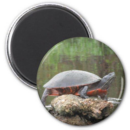 Foto pintada de la tortuga imán de frigorífico