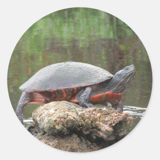 Foto pintada de la tortuga pegatina redonda