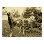"""Foto """"postal del vintage del carro de la cabra"""" -"""