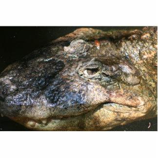 foto principal del cocodrilo esculturas fotograficas