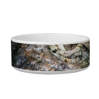 foto principal del cocodrilo tazon para gato