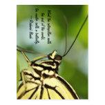 Foto principal y cita de la mariposa tarjetas postales