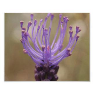 Foto púrpura de la flor cojinete