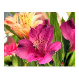 Foto púrpura de las flores de los lirios de la flo tarjeta postal