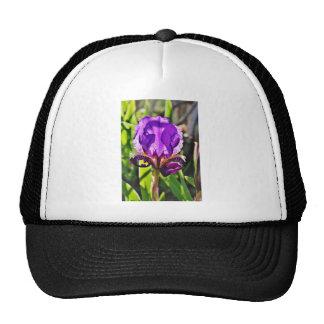 Foto púrpura del iris gorras