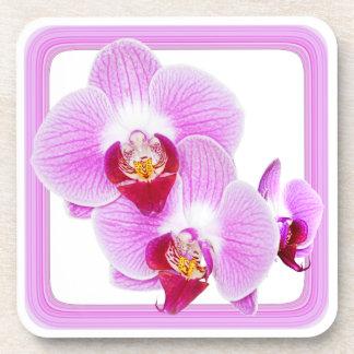 Foto radiante del primer de la orquídea con el posavasos