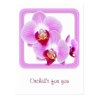 Foto radiante del primer de la orquídea con el tarjeta postal