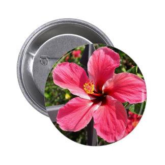 Foto roja brillante del hibisco pin