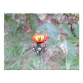 foto roja de la flor salvaje