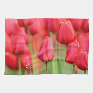 Foto roja de los tulipanes toallas