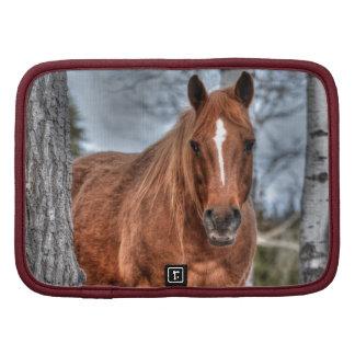 Foto roja del Animal-amante del caballo del rancho