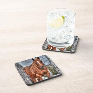 Foto roja del Animal-amante del caballo del rancho Posavasos De Bebidas