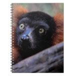 Foto roja del animal de la fauna del Lemur Cuaderno