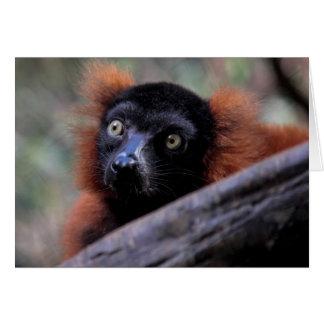 Foto roja del animal de la fauna del Lemur Tarjeta De Felicitación