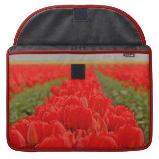 Foto roja del campo de los tulipanes funda macbook pro