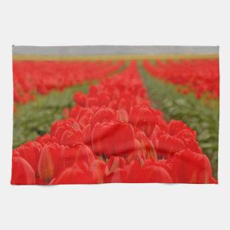 Foto roja del campo de los tulipanes toallas de cocina