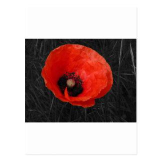 Foto roja Foto de la amapola de Mohnblume Postal