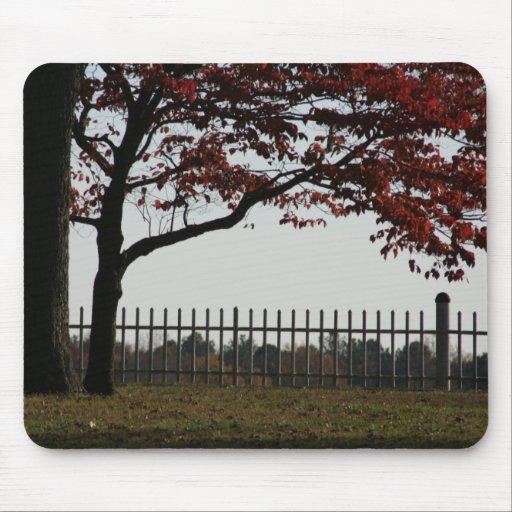 Foto roja hermosa del otoño del árbol alfombrilla de ratón
