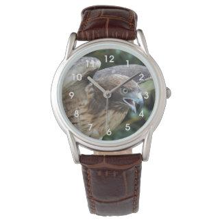 foto Rojo-atada del halcón Relojes