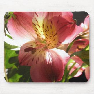 Foto rosada de las flores de los lirios de la flor tapetes de ratones