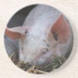 Foto rosada del cerdo posavaso para bebida