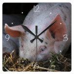 Foto rosada del cerdo relojes de pared
