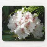 Foto rosada del rododendro tapete de ratones