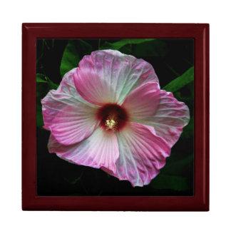Foto rosada magnífica de la flor del Central Park Cajas De Regalo