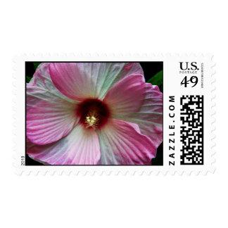 Foto rosada magnífica de la flor del Central Park Estampillas