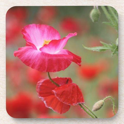 Foto rosada y roja de las amapolas posavasos de bebida